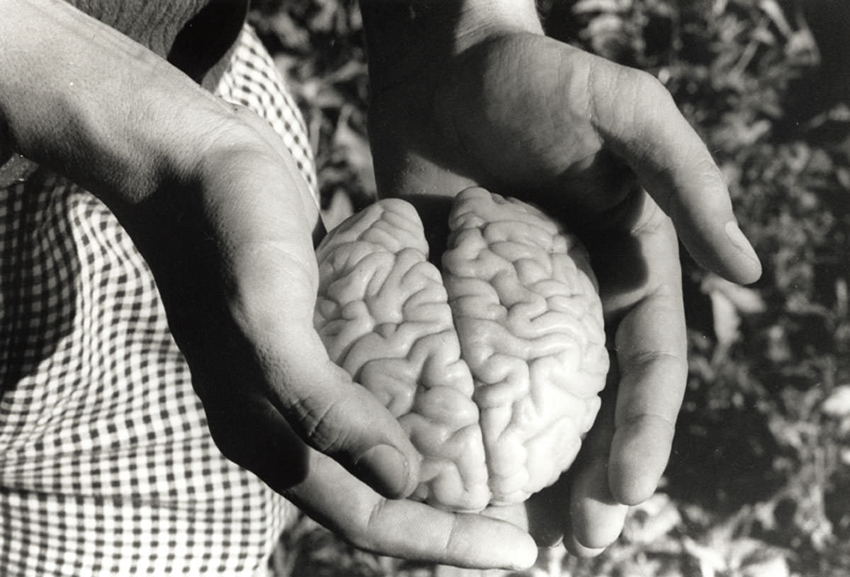 Cérebro Diminuto